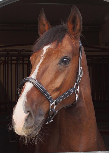 Päitsed|Ratsavarustus|Premium Horse